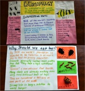Bug & Insect Crafts + Entomophagy #EEKologist